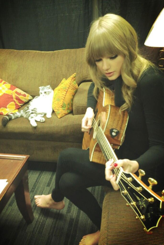 Taylor Swift, Cat, Meredith, Celeb with Cats