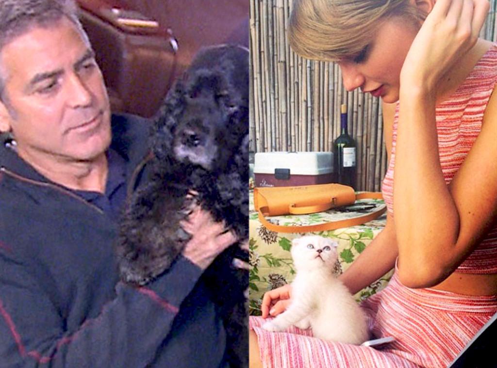 George Clooney, Dog, Einstein, Taylor Swift, Cat, Olivia Benson