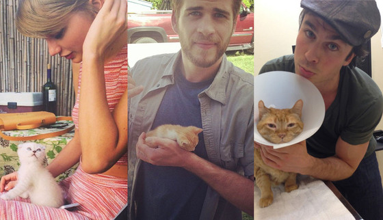 Celeb with cats split