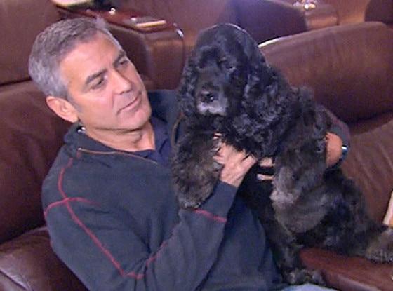 George Clooney, Dog, Einstein