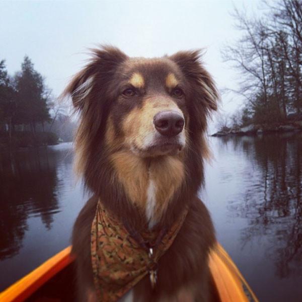 Amanda Seyfried, Dog, Finn