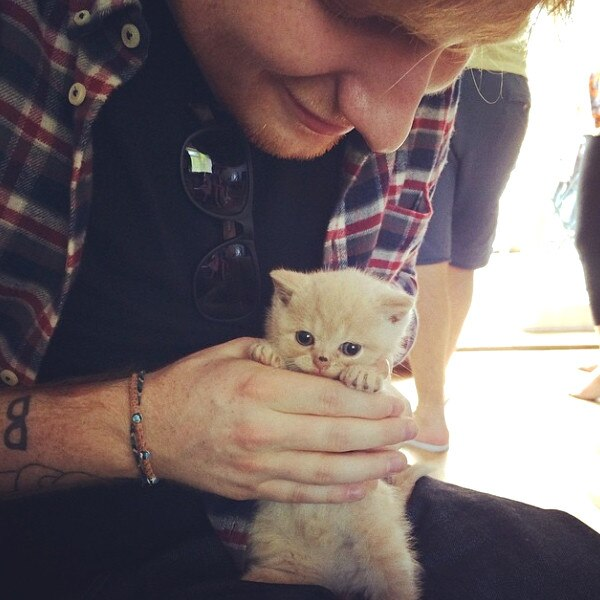 Celebs with Cats, Ed Sheeran