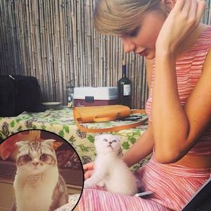 Taylor Swift, Cat, Olivia Benson, Meredith