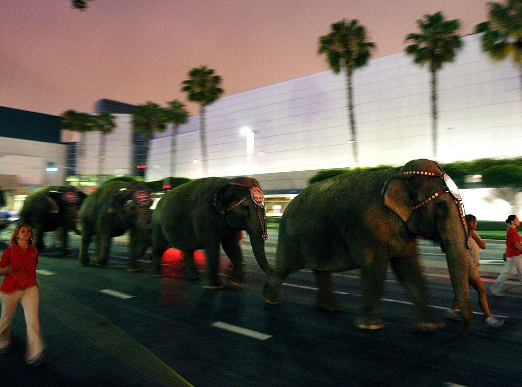 Elephants, Staples Center, Michael Jackson Memorial