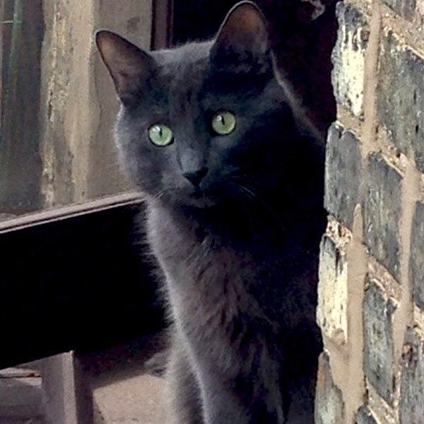 E!'s Cutest Cat, Hutch