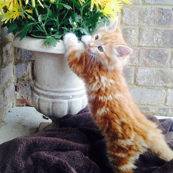 E!'s Cutest Cat, Pumpkin