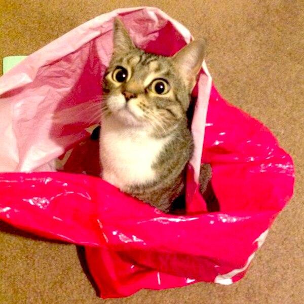 E!'s Cutest Cat, Mari