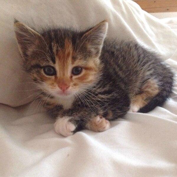 E!'s Cutest Cat, Khloe