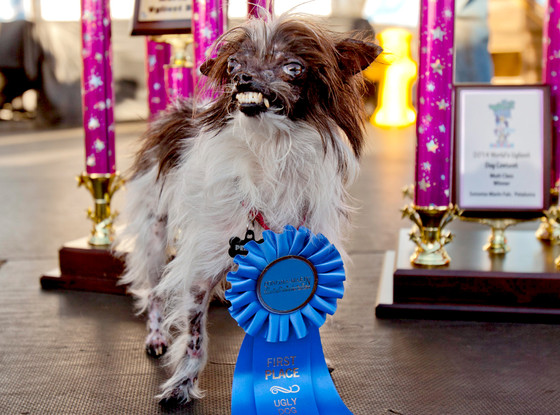 Peanut, World's Ugliest Dog