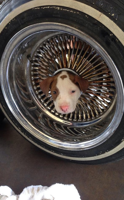 Puppy Stuck in Tire Rim