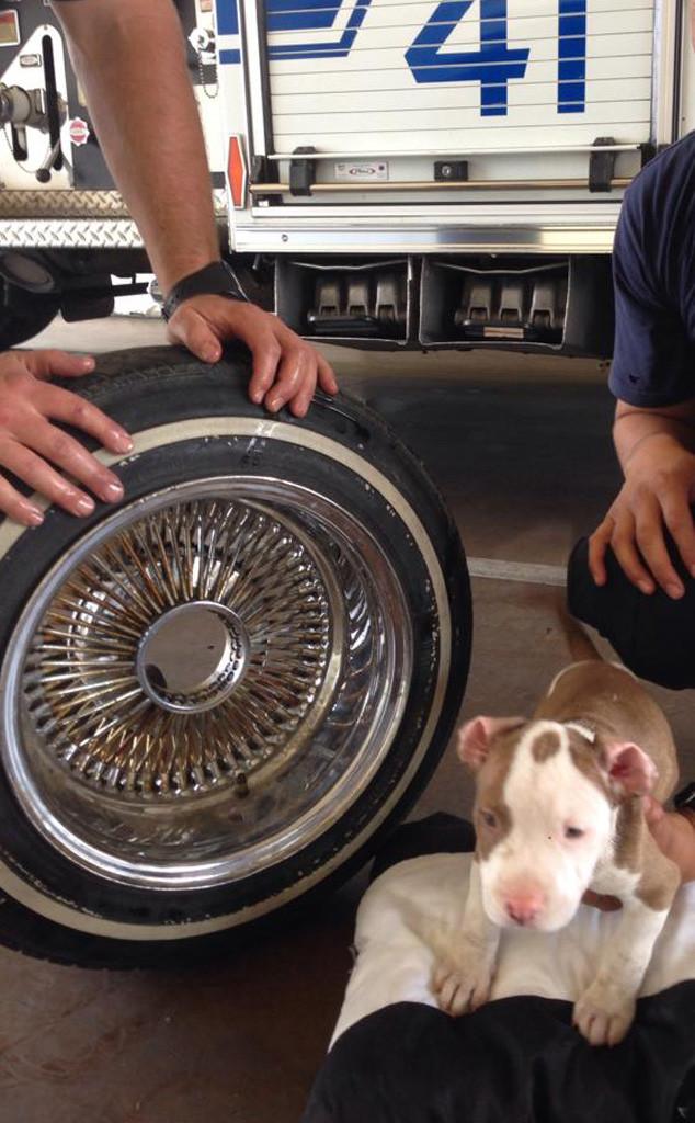 Puppy Stuck in Tire Rim