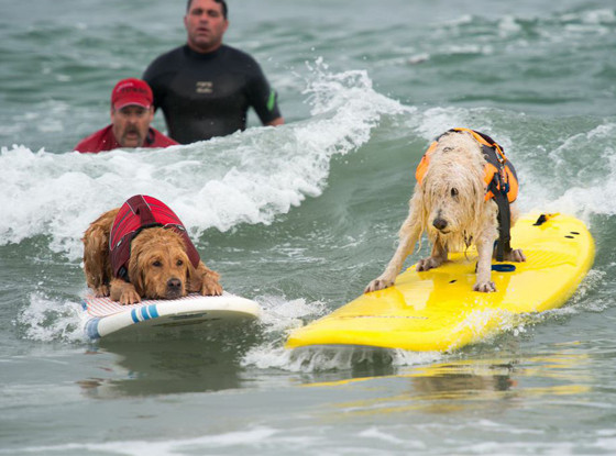Nat'l Surf Dog Competition