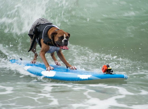 Nat'l Surf Dog Competition