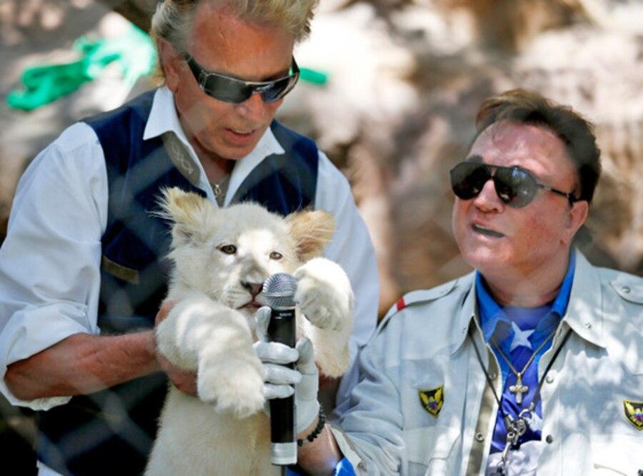 Siegfried & Roy, Lion Cubs