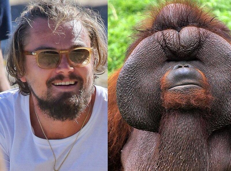 leo orangutan