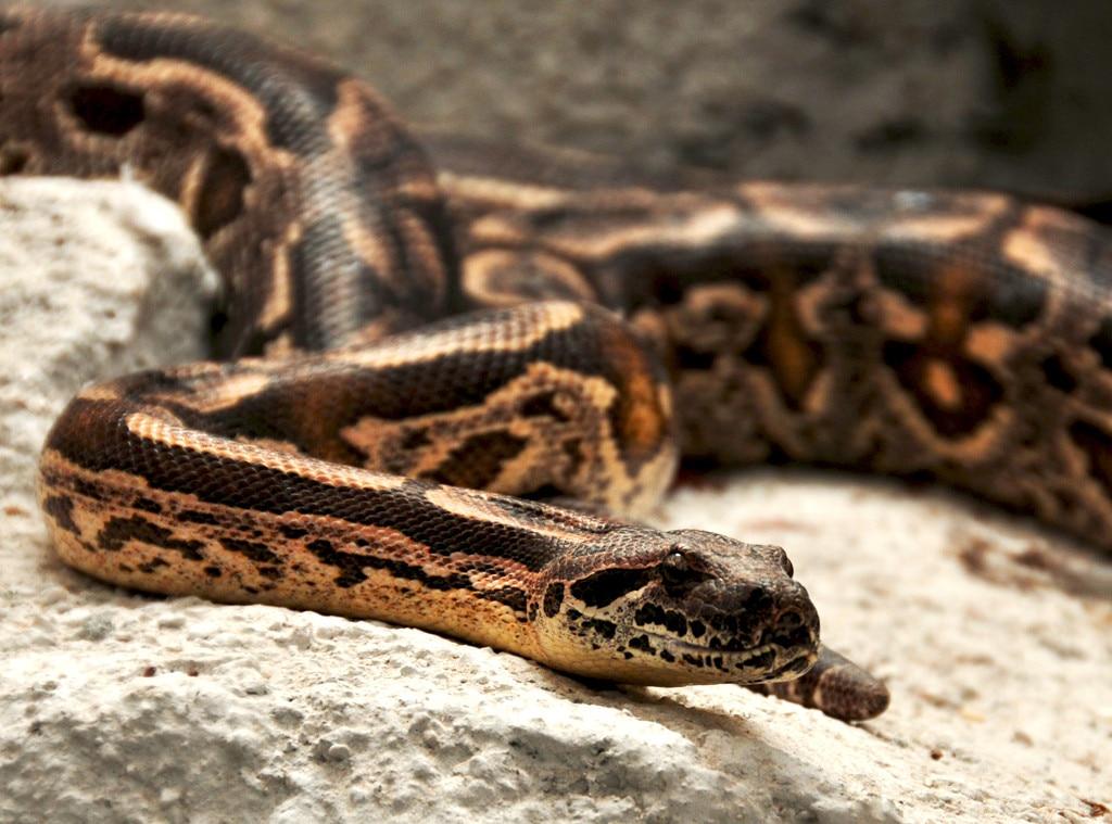Nicki Minaj, Snake