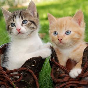 new kitten supplies