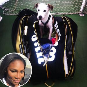Serena Williams, Dog, Jackie