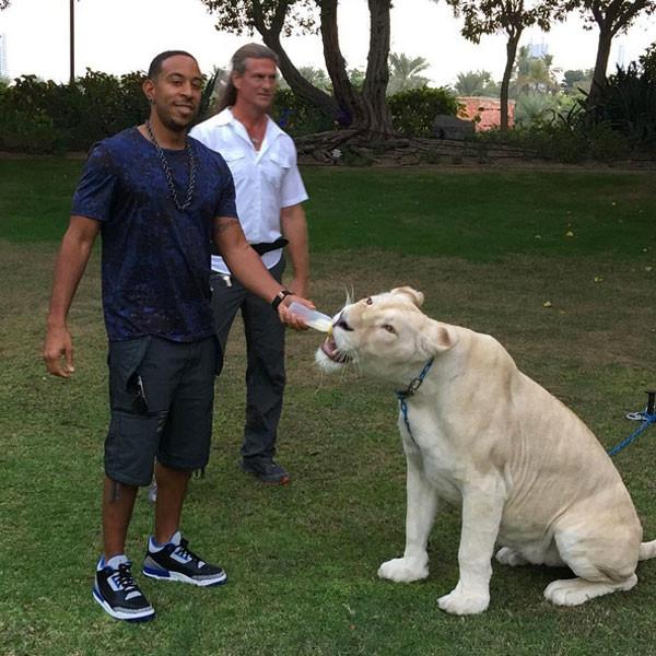 Ludacris From Celebrities Gone Wild Stars Posing With