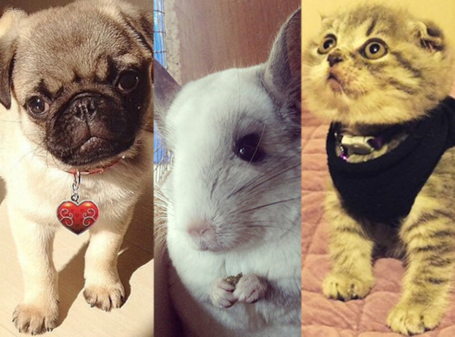 18 Super-Cute Animals That Can Be Our Valentines | E! News