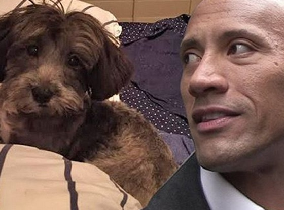 Dwayne Johnson, Puppy