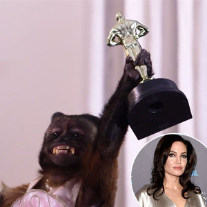 Animal Actors, Angelina Jolie