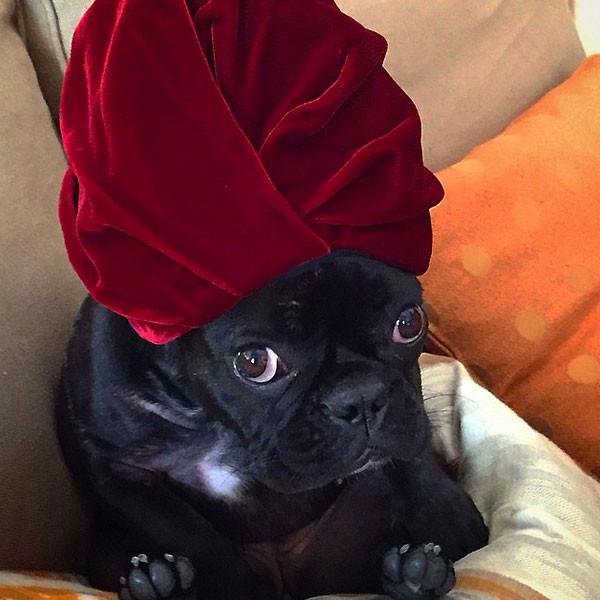 Lady Gaga, Dog, Instagram