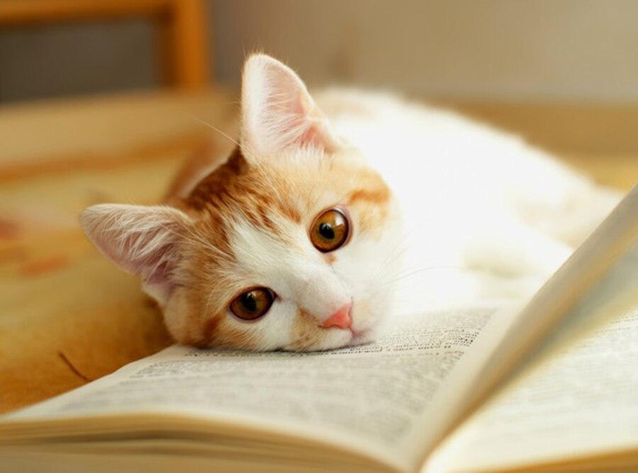Cat, Books