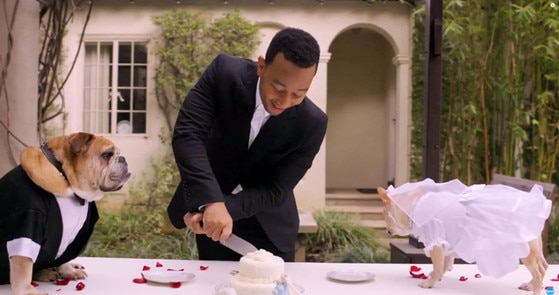 John Legend, Dog Wedding