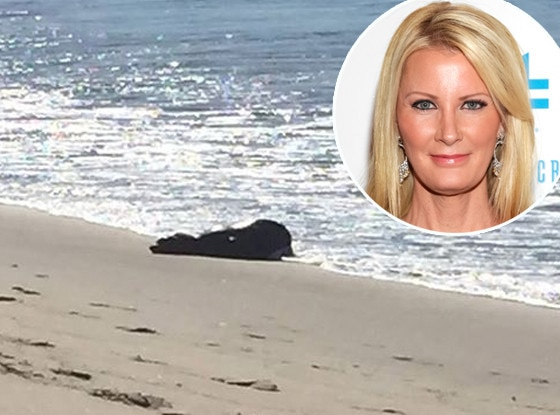 Sandra Lee, Seal