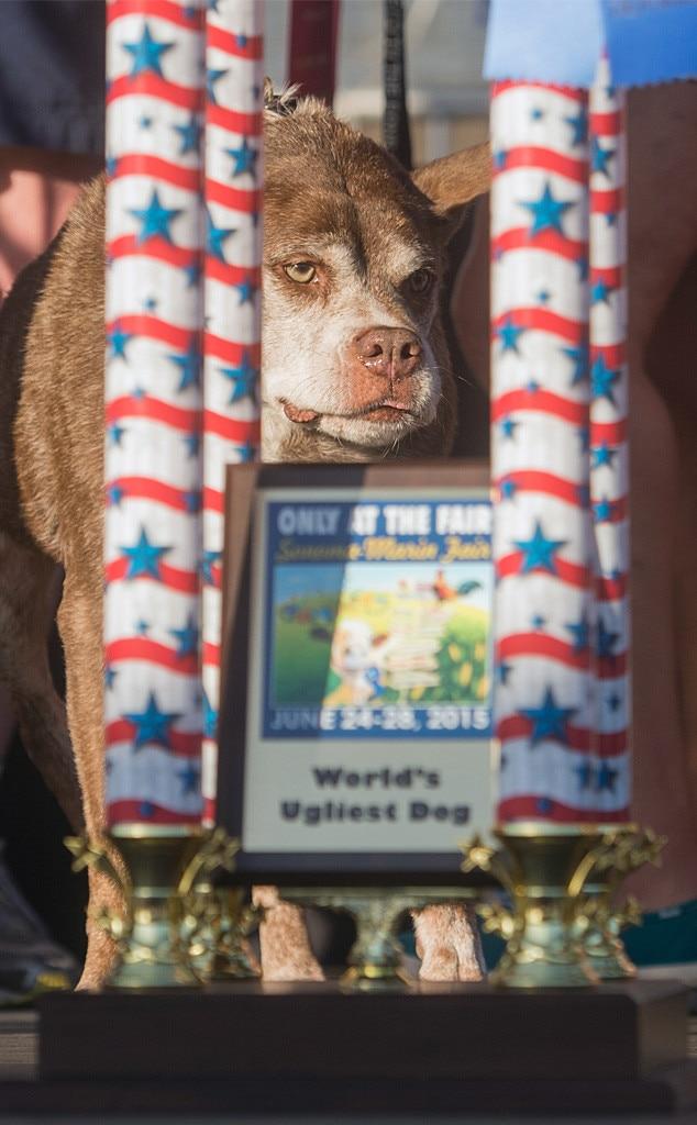 Quasi Modo, World's Ugliest Dog Competition