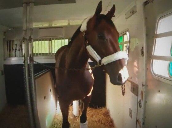 American Pharaoh, Air Horse One