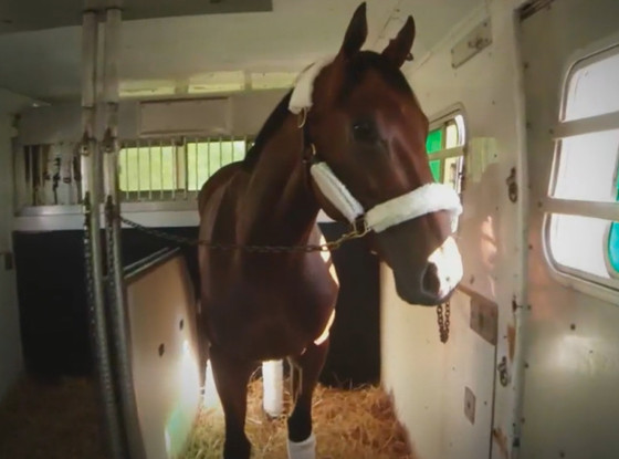 Kentucky Derby Champion American Pharoah Flies On A Plane