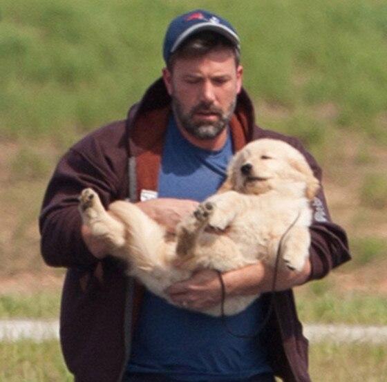 Ben Affleck, Puppy