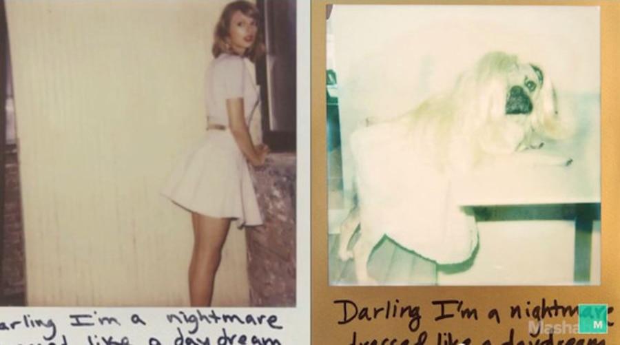 Doug the Pug Recreates Taylor Swift Instagram Photos