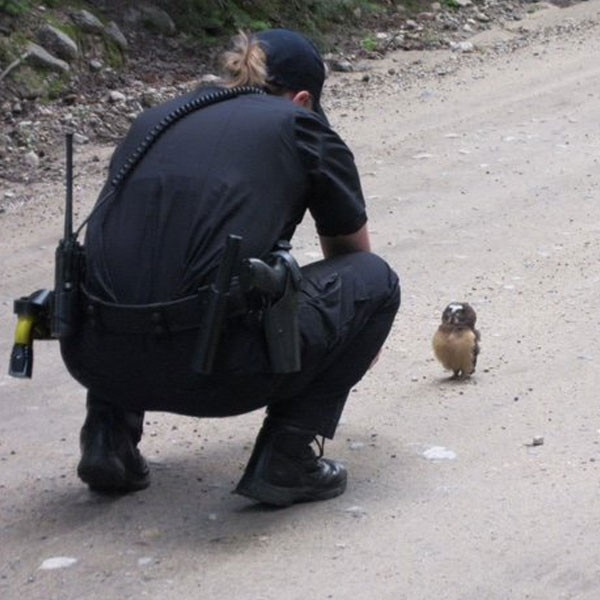 Boulder County officer and owl