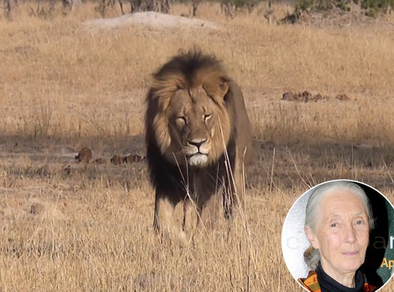 Cecil The Lion, Jane Goodall