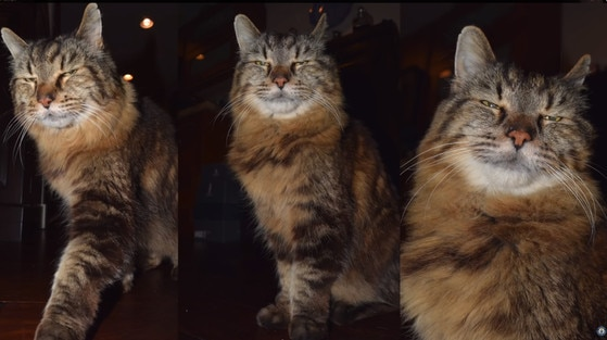 Corduroy the Cat, Oldest Living Cat, Guinness World Records