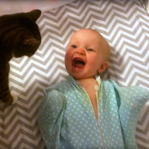 Cat, Baby
