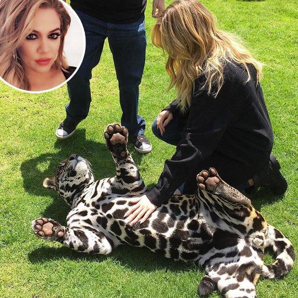 Khloe Kardashian, Jaguar