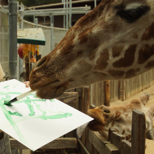 Oakland Zoo Animal Painting Auction