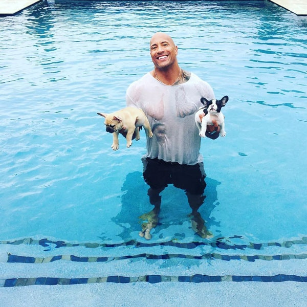 The Rock, Puppies, Dogs