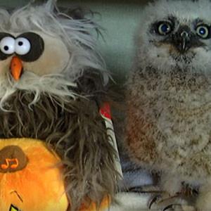 Dancing Halloween Owl