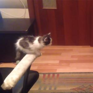 Kitten Table Jump Fail