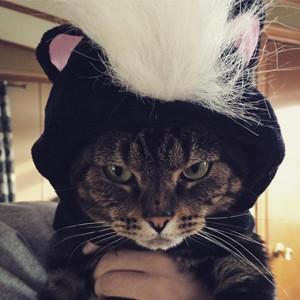 Instagram cats in halloween costumes