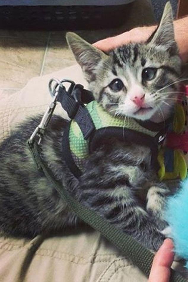 Worried Cat