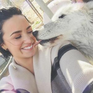 Demi Lovato, Wolf