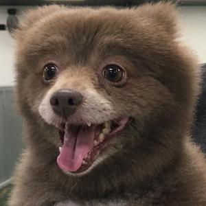 Bear or Dog, Bounce, Imgur