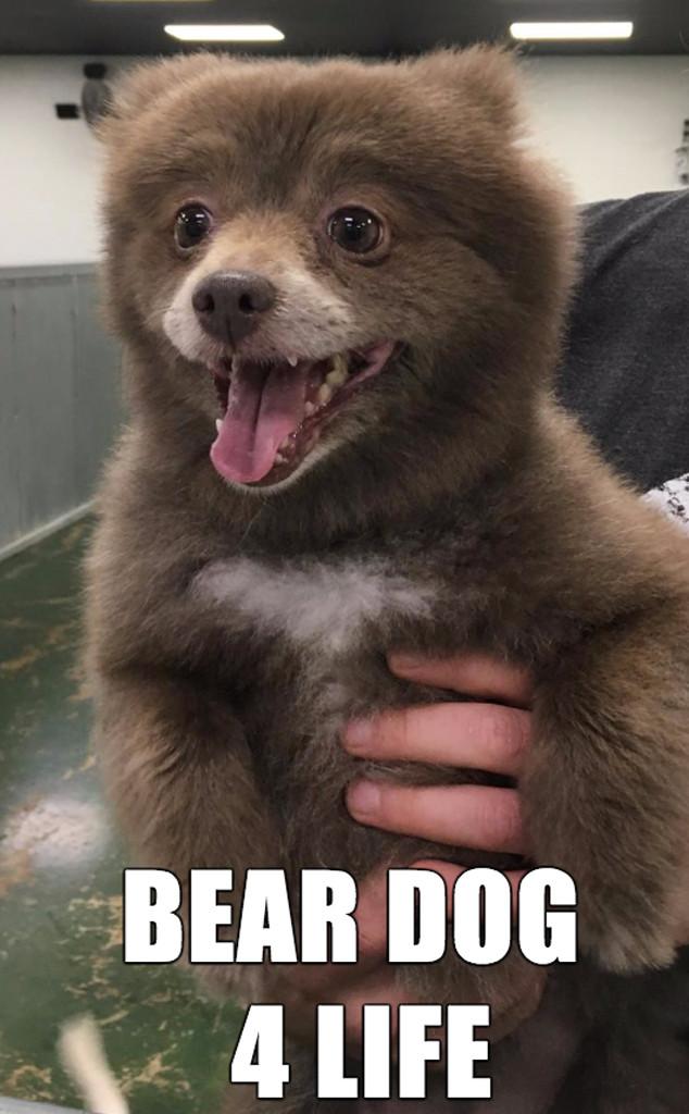 Bear Dog Meme