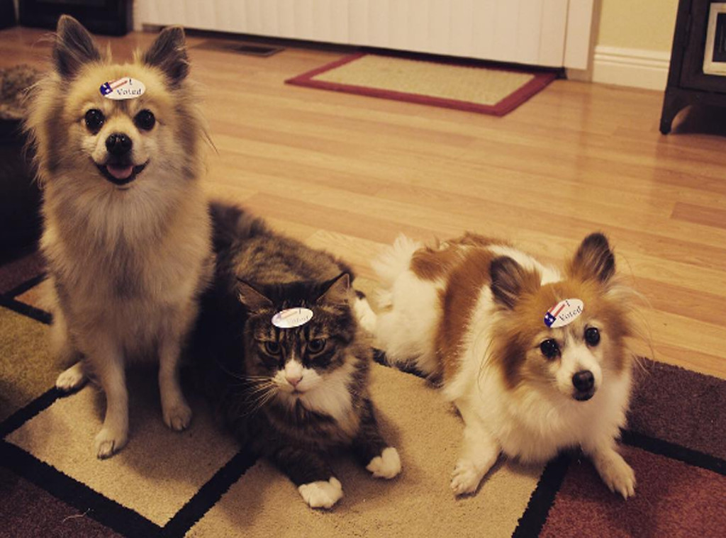 Pets Who Voted, 2016 Election